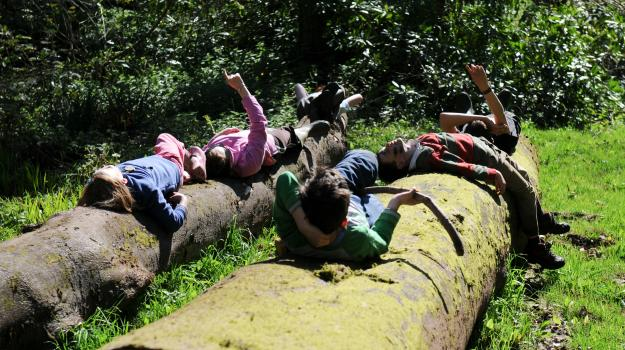 Children lying on a log