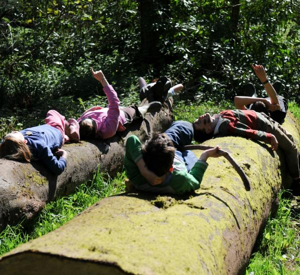 Children lying on a tree