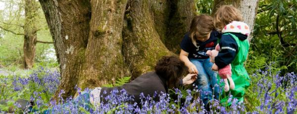 children in the bluebells