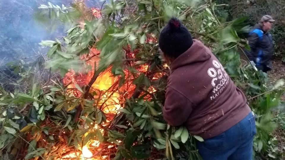bonfire of rhodo