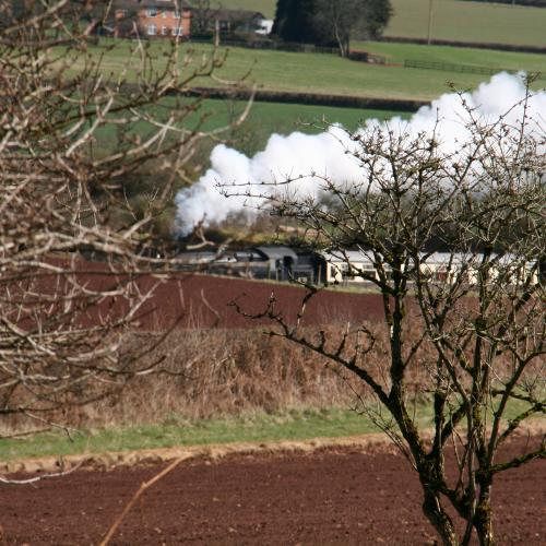 steam train seen from the woods